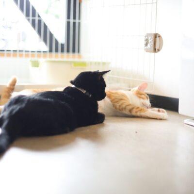 保護猫の兄妹(黒猫・茶白ねこ)